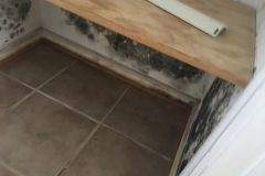 water-mold03