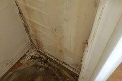 water-mold07
