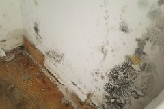 water-mold11